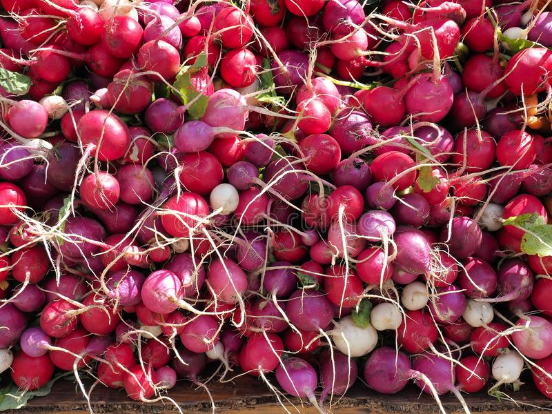 Red, purple and white radishes for sale at an agricultural market in New York. Bright background stock photo