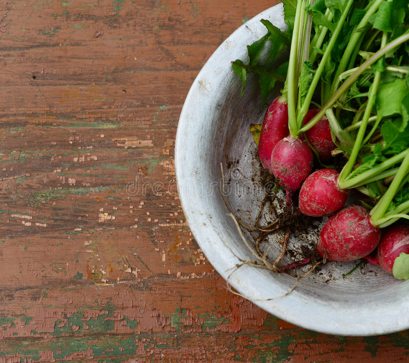 Red Radish with green leaves in aluminum plate stock photos