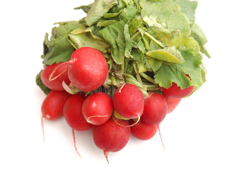 Red radish. Some fresh red radish roots royalty free stock photography