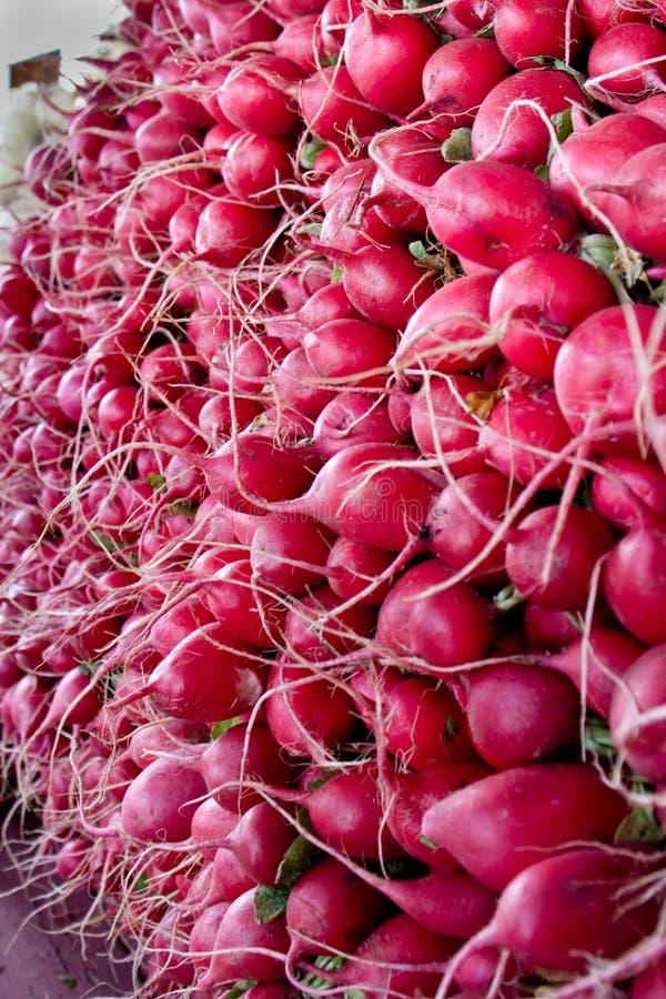Red Radishes at Market royalty free stock photo