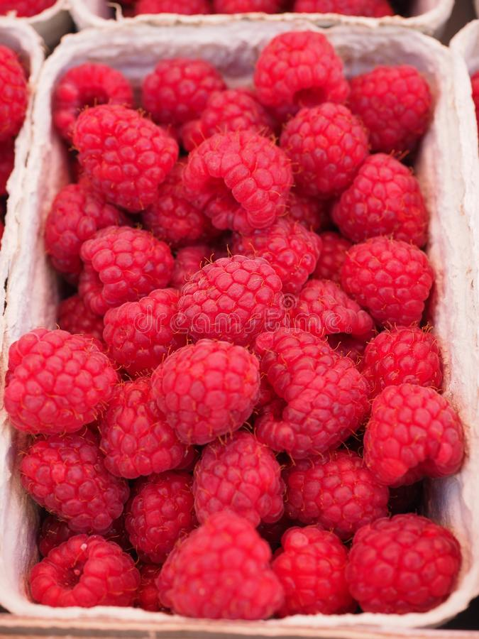 Red Raspberry on White Container stock image