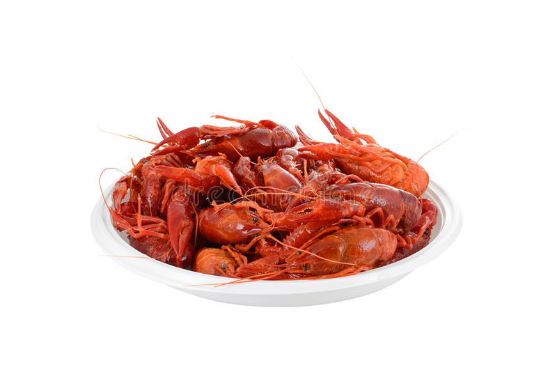 Red raw crayfish royalty free stock images