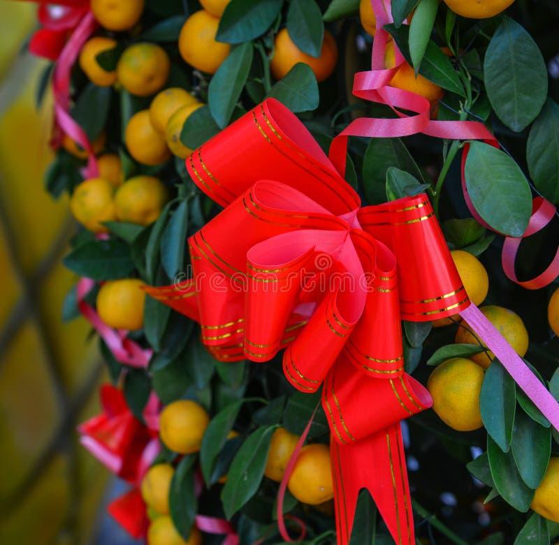 Red ribbon on citrus tree royalty free stock photos