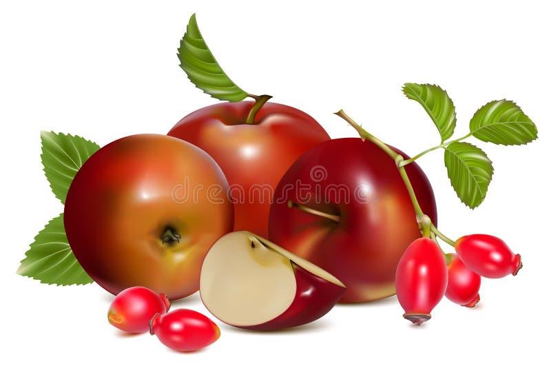 Red ripe apples and rose hip (dog rose hips).