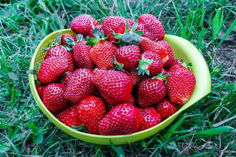 Red ripe garden strawberries in a deep plastic plate, Cup, bowl, utensils standing on the grass stock photo