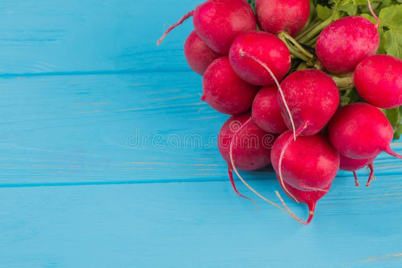 Red ripe radishes close up. stock images