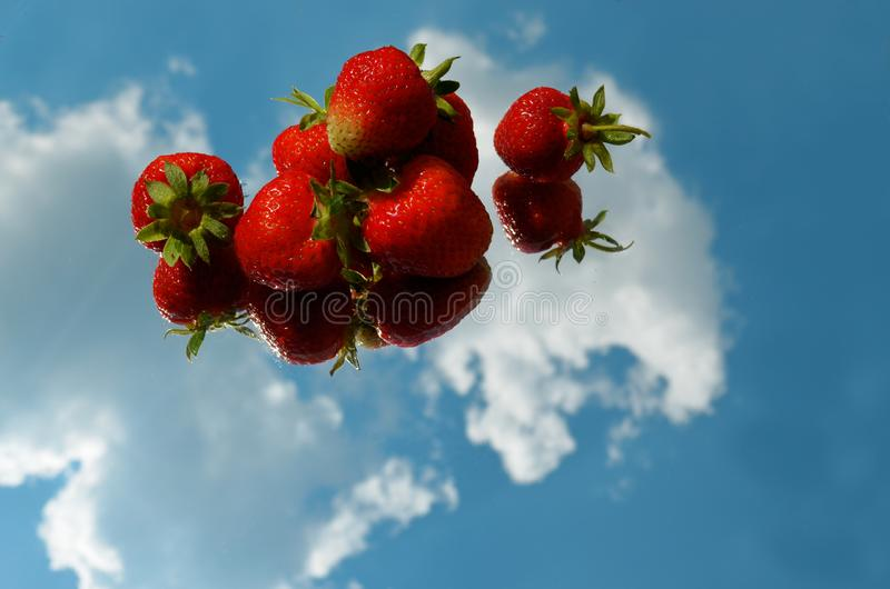 Red ripe strawberry berries laid out horizontally in a row on a mirror with the reflection of the sky and clouds royalty free stock image