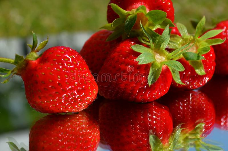 Red ripe strawberry berries close-up reflected in a mirror on a blurred background of green grass stock image