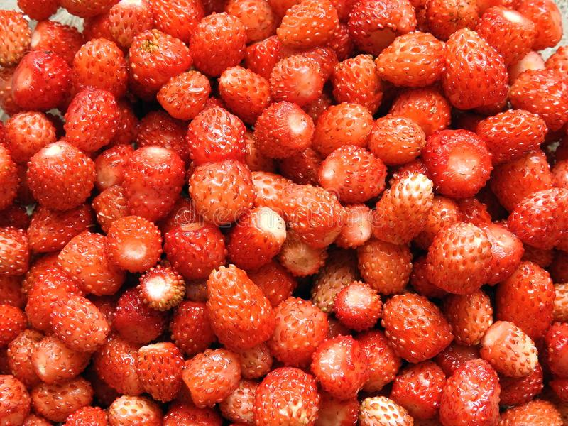 Red ripe strawberry , Lithuania royalty free stock images