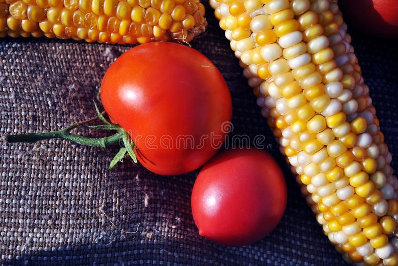 Red ripe tomatoes on a rough texture sackcloth background with yellow sweet corn cobs, close up organic texture background stock image