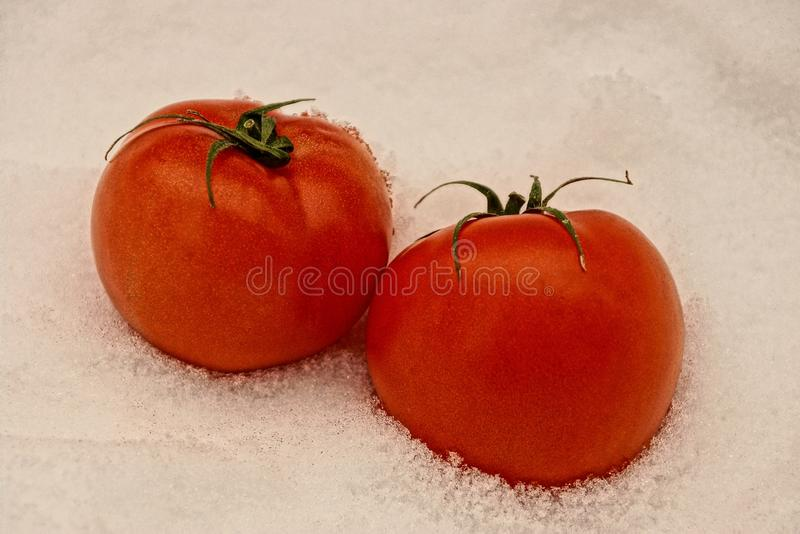 Red, ripe tomatoes in the snow stock photos