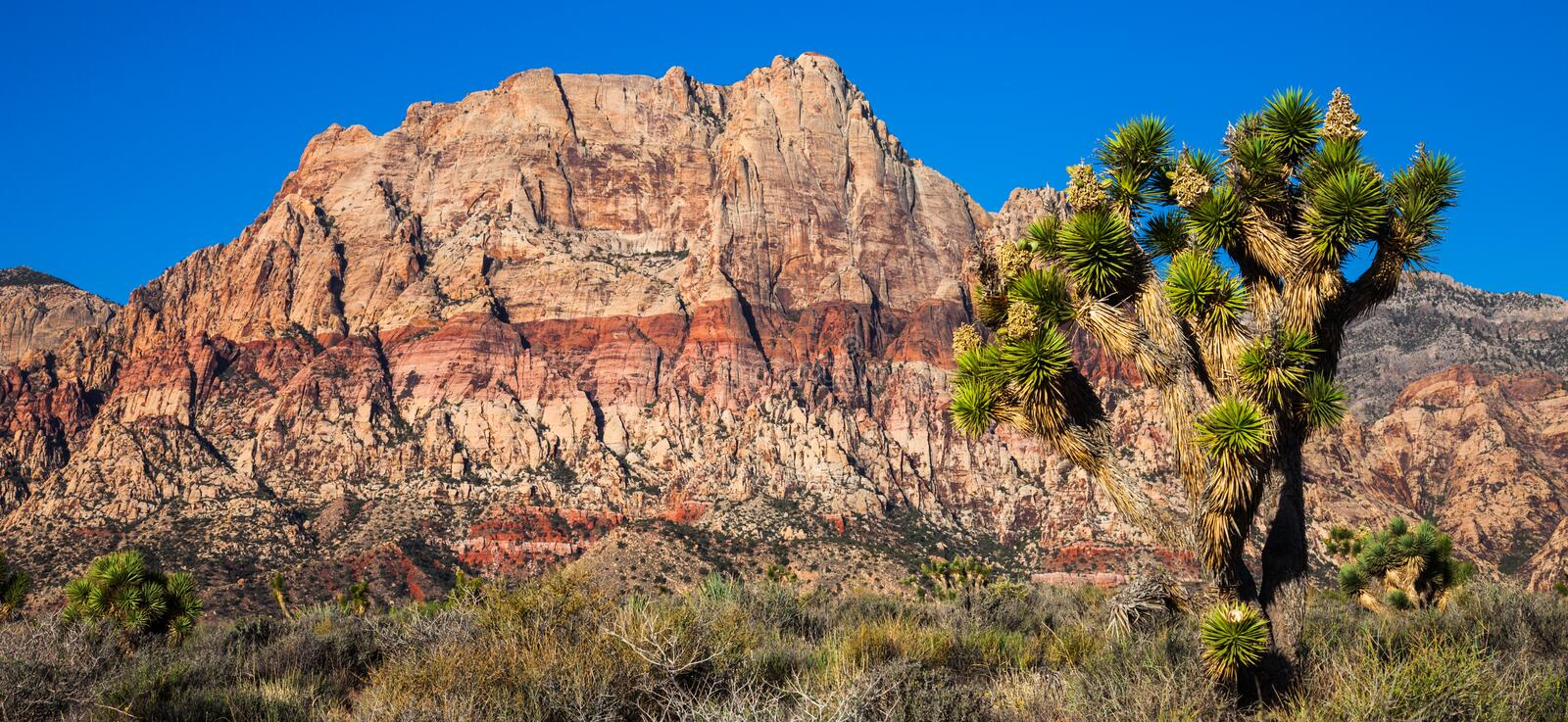 Red Rock Canyon Conservation Area stock photos