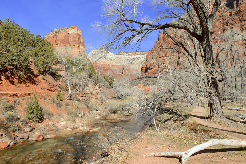 Red rock canyon and mountains, Zion National Park, Utah stock image