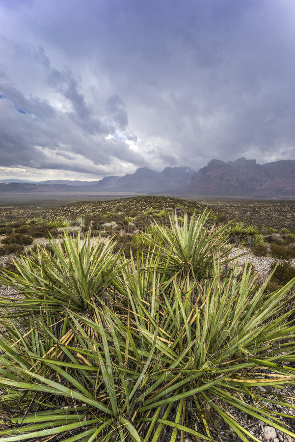 Red Rock Canyon. National Conservation Area after rain storm royalty free stock images