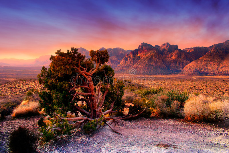 Red Rock Canyon, Nevada. The Red Rock Canyon National Conservation Area is located just a few miles west of Las Vegas and encompasses 197,000 acres within the royalty free stock photo