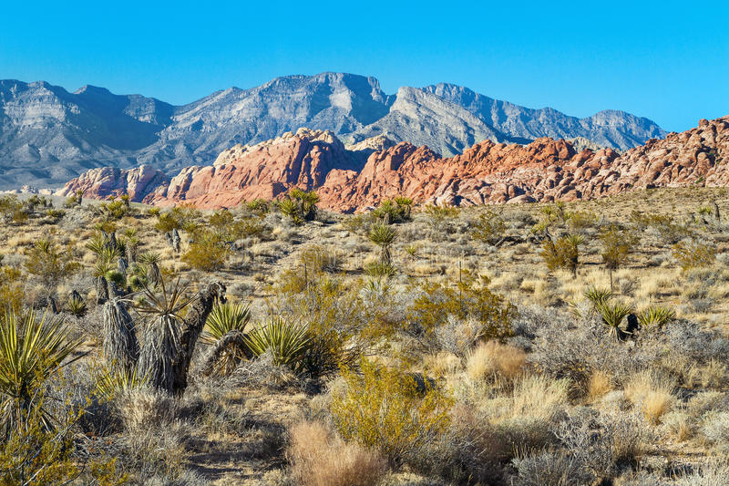 Red Rock Canyon, Nevada. Desert in Red Rock Canyon, Nevada, USA royalty free stock image