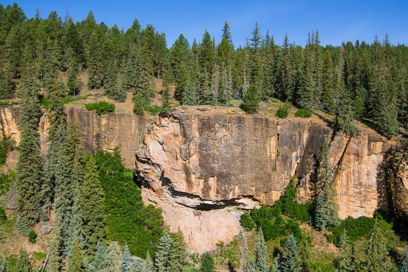 Red rock sandstone canyon wall and forest of spruce and fir. Sandstone canyon wall and forest above the Piedra River in the Rocky Mountains near Pagosa Springs royalty free stock image