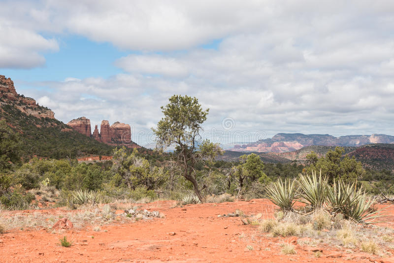 Red Rock State Park in spring. Green plants and trees in Red Rock State park at springtime stock photo