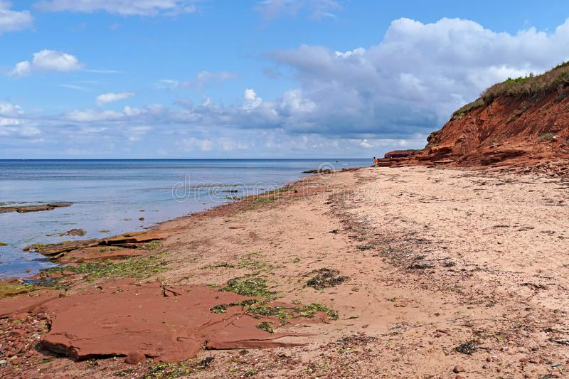 Red rocks and sand on the seashore in Prince Edward. Island, with colorful algae and seaweed royalty free stock photography