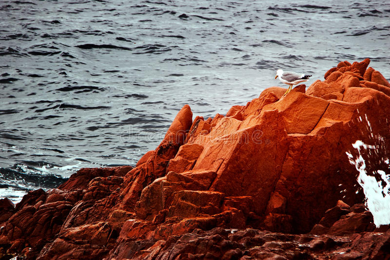Red rocks and seagull. Standing on one of them watching the waves royalty free stock photo