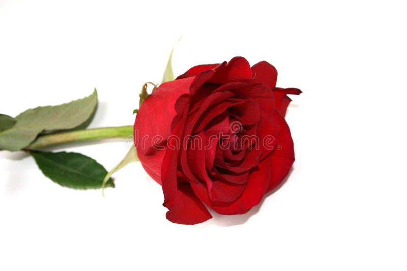 Download Red Rose Royalty Free Stock Photo - Image: 11338095