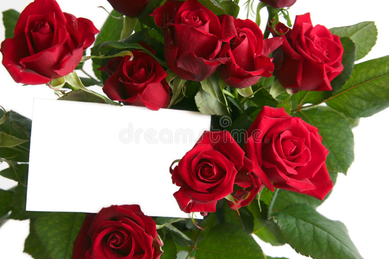 Download Red Rose Royalty Free Stock Photo - Image: 1849925