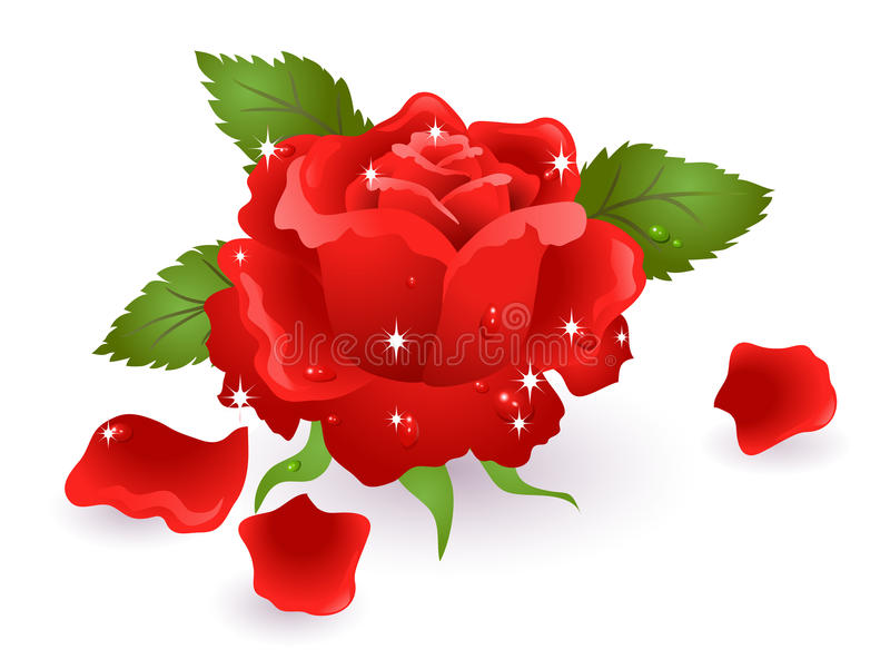 Red rose. With stars and dewdrops royalty free illustration