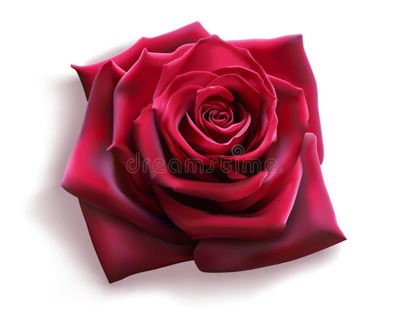 Download Red Rose stock vector. Image of petals, gift, floral - 19118690