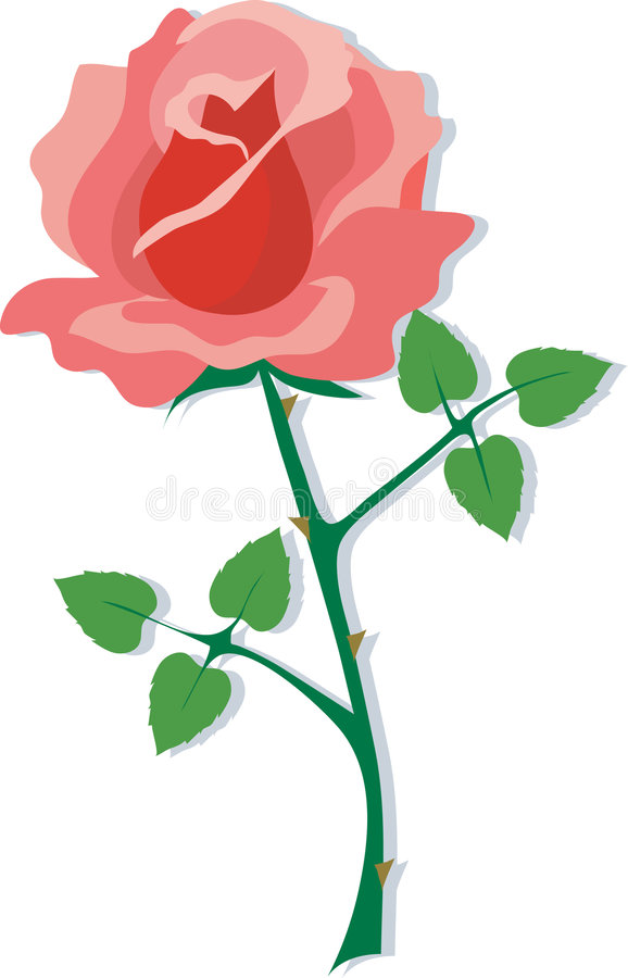 Red Rose. A single red rose on a white background vector illustration