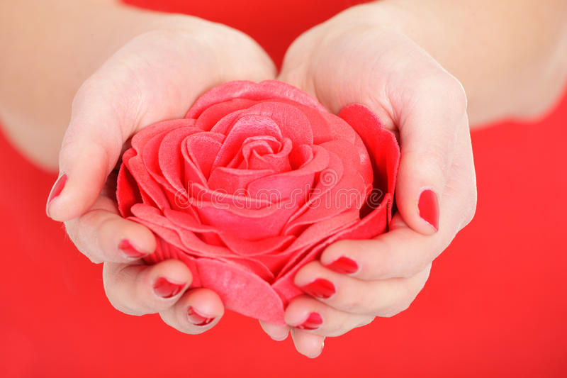 Download Red Rose Royalty Free Stock Images - Image: 23146129