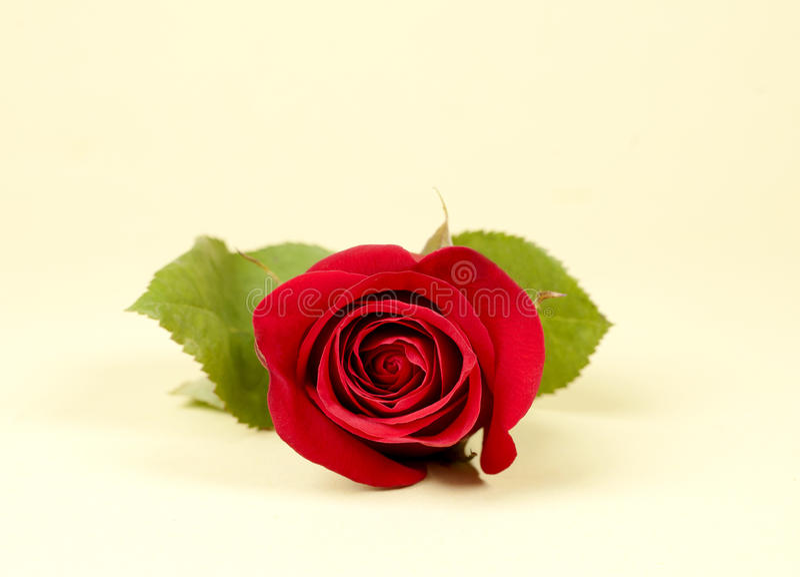 Download Red Rose Stock Image - Image: 26710341