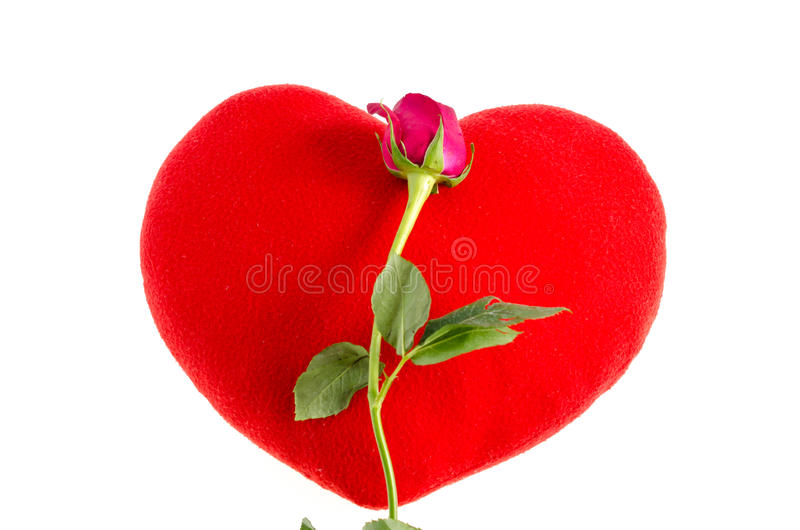 Download Red Rose stock image. Image of colorful, heart, love - 37668723