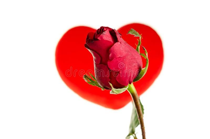 Download Red Rose stock photo. Image of flower, bokeh, wedding - 37668768