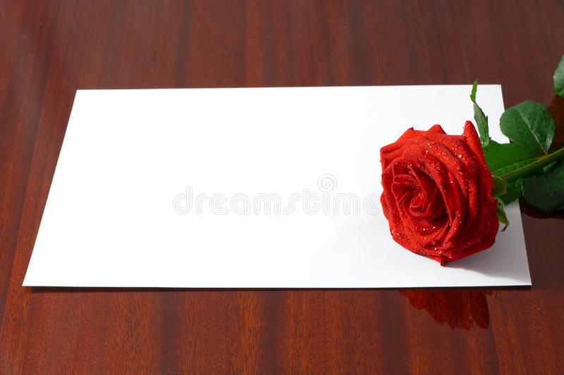 The red rose royalty free stock photos