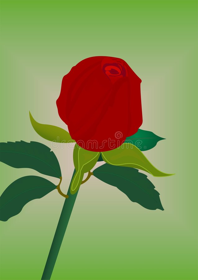 Download Red rose stock vector. Image of green, romantic, blosom - 3993955