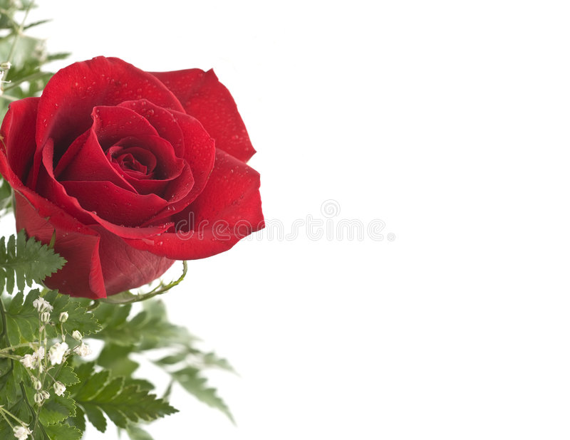Download Red Rose Stock Images - Image: 7502144