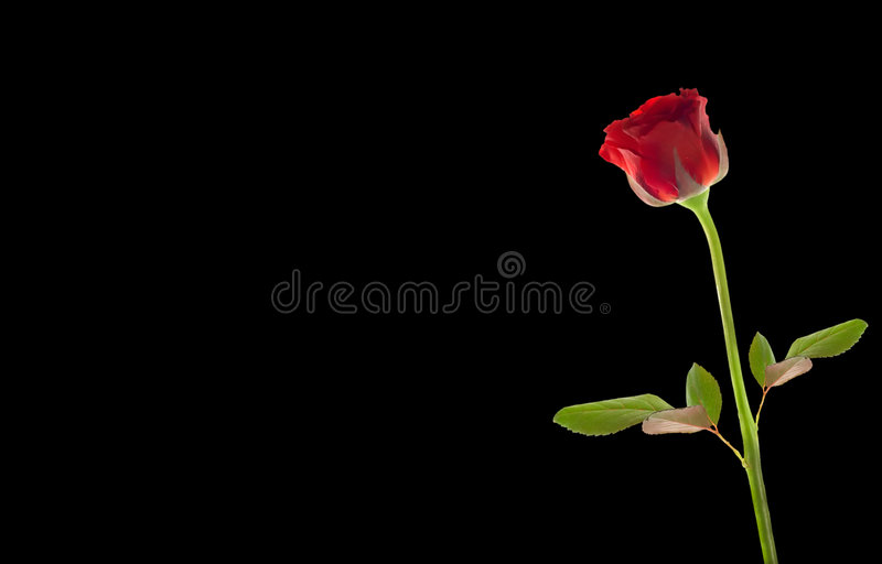Download Red rose stock image. Image of pattern, petals, romance - 871609