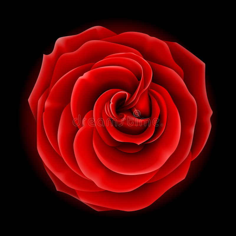 Free Red Rose Royalty Free Stock Image - 9354376