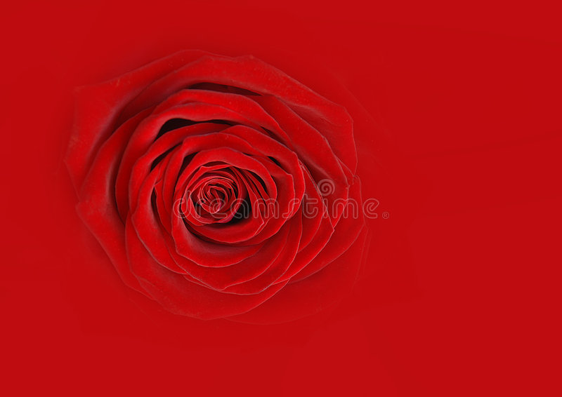 Red rose abstract royalty free stock photography