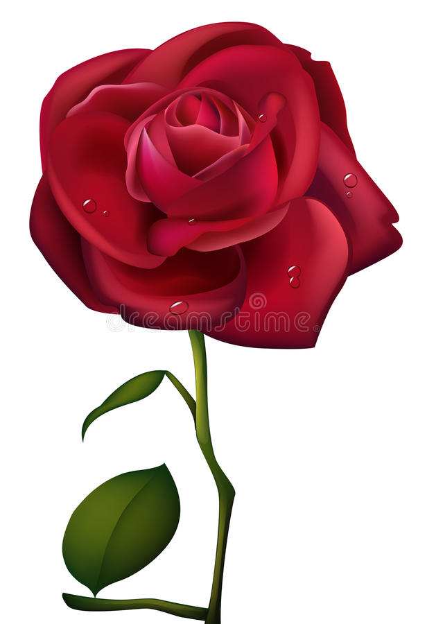 Free Red Rose And Waterdrop Stock Photos - 12515653