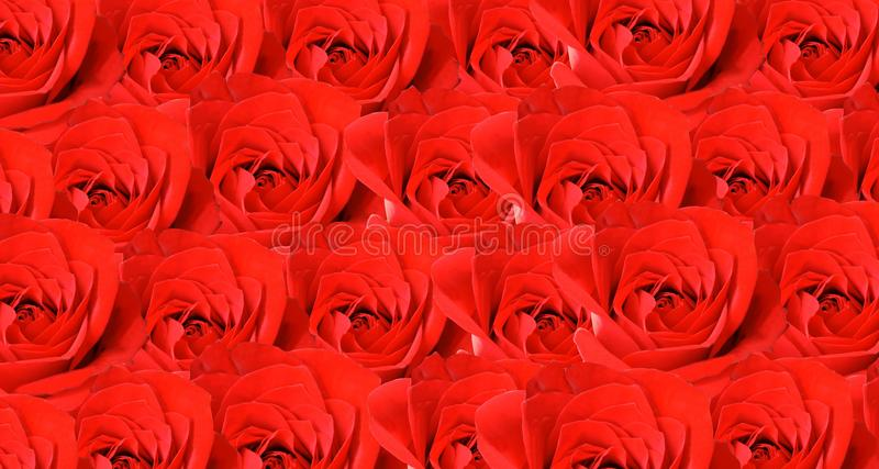 Red rose background wallpaper. stock photos