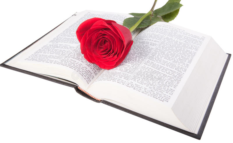 Red rose on a bible