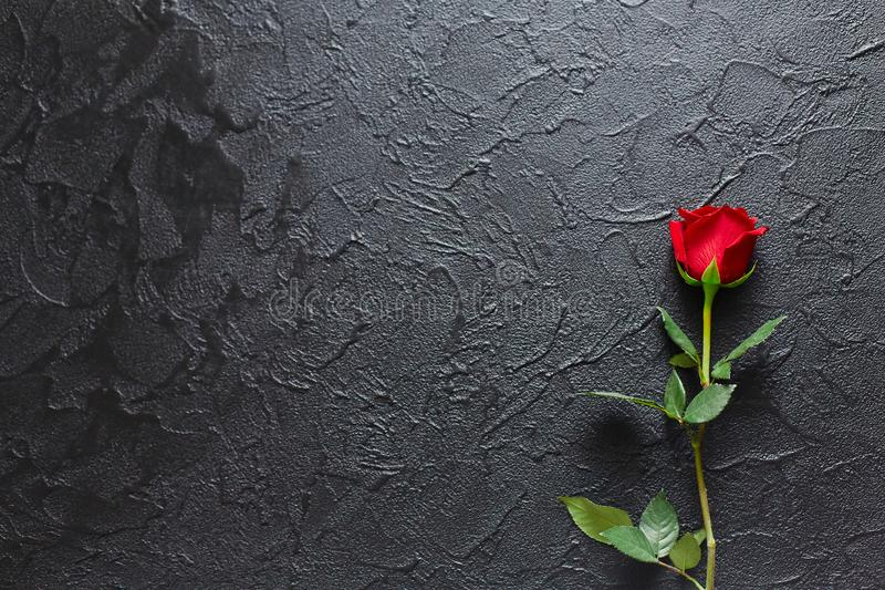 Red rose on a black background, stone. A condolence card. Empty space for emotional, quotes or sayings. The view from the top stock photography