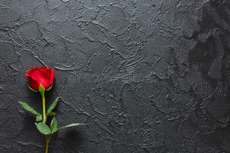 52 557 Red Rose Black Background Photos Free Royalty Free Stock Photos From Dreamstime