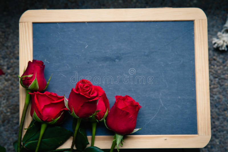 Red rose on blackboard. Valentine day stock photos