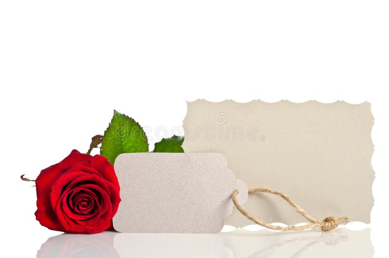 Red rose and blank gift card for text royalty free stock photography