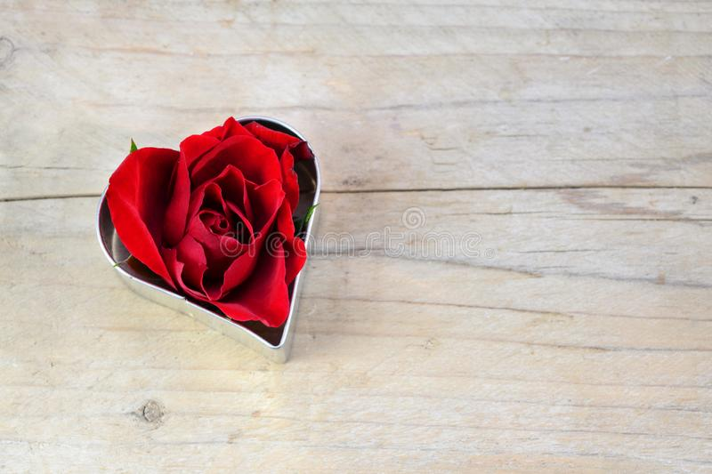 Red rose blossom in a heart shape cookie cutter, love concept for Valentine`s or Mother`s Day on rustic wood, copy space stock image
