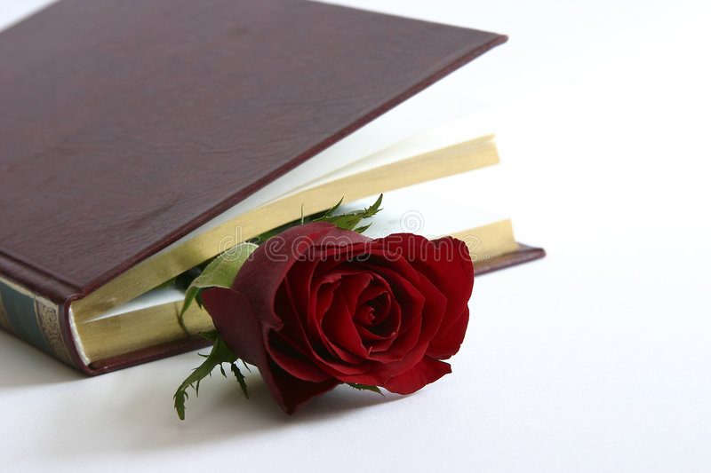 Red rose in a book stock photos