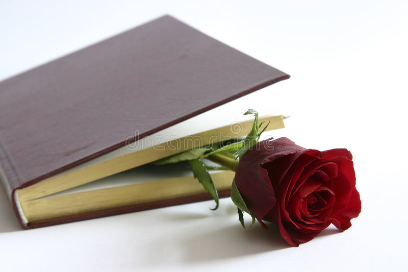 Red rose in a book royalty free stock photo