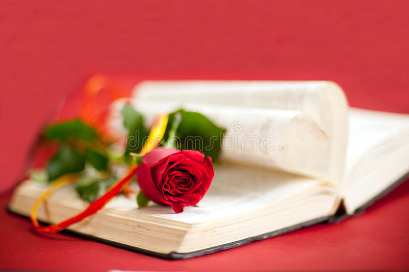 Download Red rose at book stock image. Image of romance, page - 24803497
